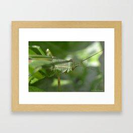 Grasshopper Framed Art Print