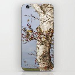 Rosehips, Birch And Sky iPhone Skin