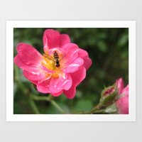 Flower Bee Art Print