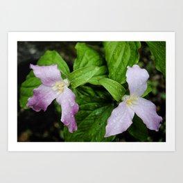Pink Trillium in Early Spring, Fine Art Print, Botanical Art, Pink Flowers Art Print
