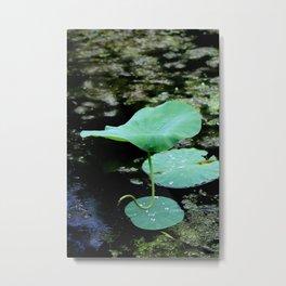 Lone Lilypad Metal Print