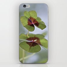 A lucky day iPhone & iPod Skin