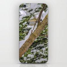 First snowfall iPhone & iPod Skin
