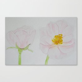 Two Pale | Too Pale Canvas Print