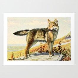 Fuertes, Louis Agassiz (1874-1927) - Burgess Animal Book for Children 1920 (Wolf) Art Print