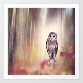 Barn owl perching in the autumn sunny forest Art Print