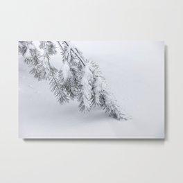 Winter's Pine 2 Metal Print
