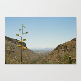Flower on the Horizon Canvas Print