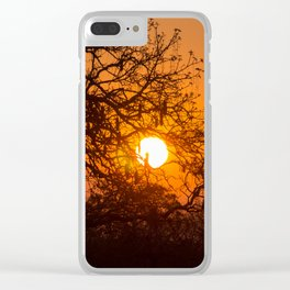 Sultry sun setting behind the sausage tree Clear iPhone Case
