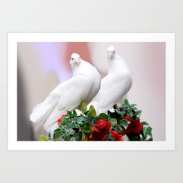 Dove White Birds Art Print