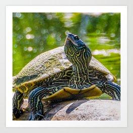 Turtle is the New Leopard Print Art Print