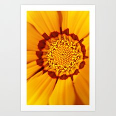 Orange Sun - gazania flower 3509 Art Print