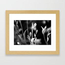 Hosta Buds and Stems Framed Art Print
