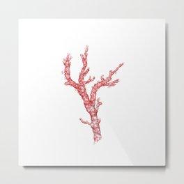 red coral - corallium rubrum Metal Print