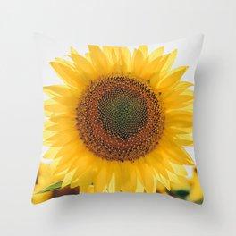 Sunflower´s Season (V) Throw Pillow