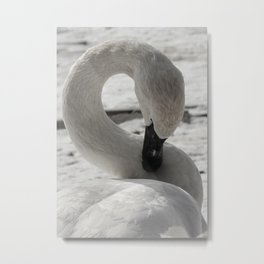 S is for Swan by Teresa Thompson Metal Print