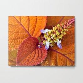 Autumn Hosta Metal Print