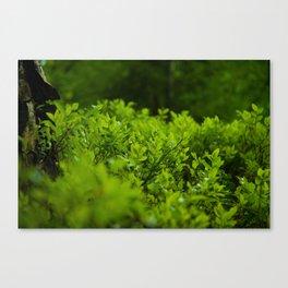 Silk of nature Canvas Print