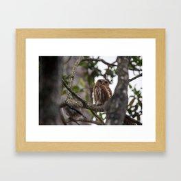 Birds from Pantanal Caburé Framed Art Print