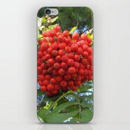 Red rowan clusters iPhone Skin