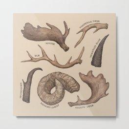 Antlers Metal Print