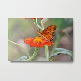 Perry Oct Butterfly #53 Metal Print