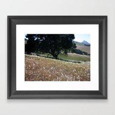 California Live Oak Framed Art Print