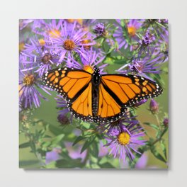 Monarch Butterfly on Wild Asters (square) Metal Print