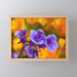 Purple Wildflowers with Gold Poppies by Reay of Light Photography Framed Mini Art Print