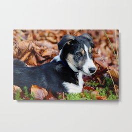 Puppy Perfection Metal Print