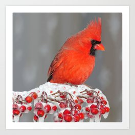 Red in Winter Art Print
