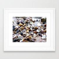 shells Framed Art Prints featuring Shells by Anne Seltmann