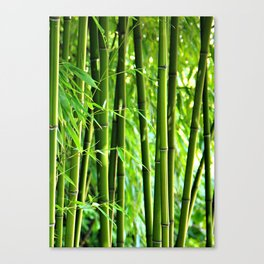 Bamboo rods Canvas Print
