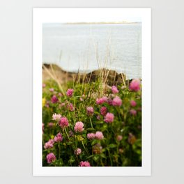 Clover by the Sea - Boho Botanical Flower Photo Art Print
