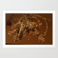 drying oregano Art Print