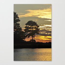 Pine Tree at Sunset by the River Canvas Print