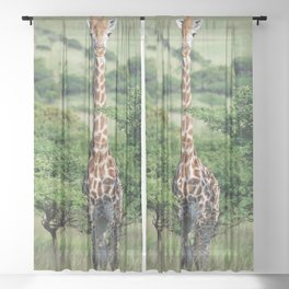 Giraffe Standing tall Sheer Curtain