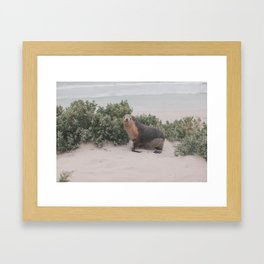 seal! Framed Art Print