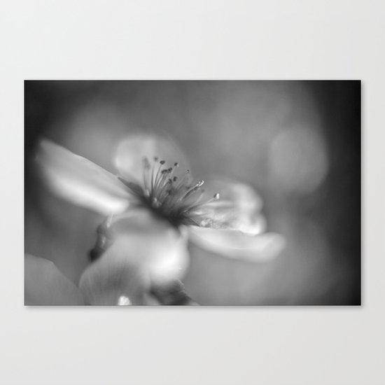 White flowers. Mono Canvas Print
