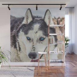 Siberian Husky with blue eyes Wall Mural