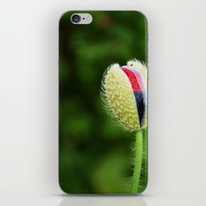 Poppy Bud iPhone & iPod Skin