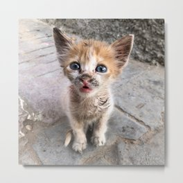 Blue Eyed Kitten, Morocco Metal Print