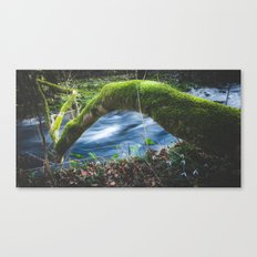 Enchanted magical forest Canvas Print