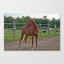 Something Behind Me Canvas Print