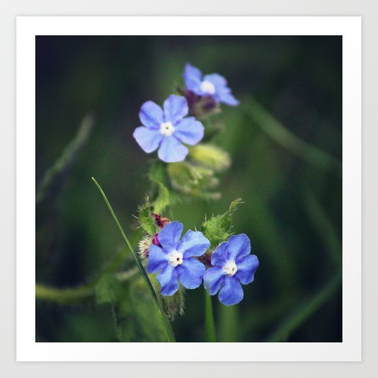 Blue Flowers Art Print