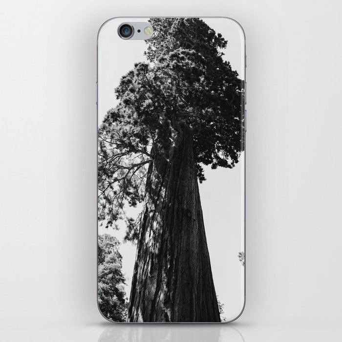 Sequoia National Park VI iPhone Skin