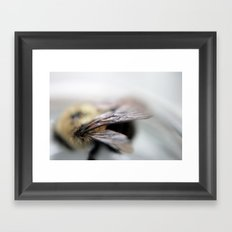 Bee Framed Art Print