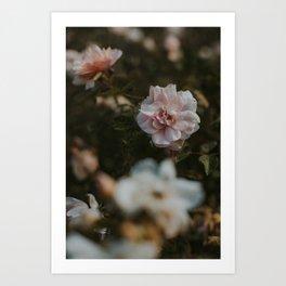 Romance in Spring Art Print