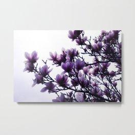 Magnolia Dreams Metal Print