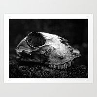 animal skull Art Prints featuring animal skull by Jo Beerens